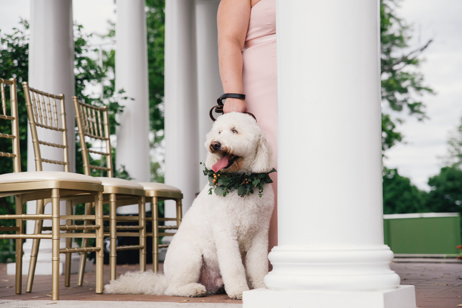 dog sitting at the altar during wedding ceremony